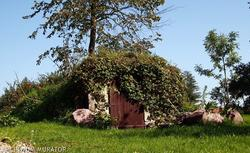 Piwniczka ogrodowa: jakie wymagania ma ziemianka?