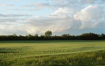 Odrolnienie i wyłączenie działki z produkcji rolnej. Jak to zrobić, gdy nie ma planu zagospodarowania przestrzennego?
