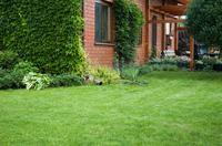 Zakładanie trawnika - z siewu czy rolki