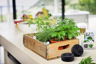 Zioła można sadzić w dużych i małych skrzyniach