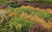 Najpiękniejsze rośliny ozdobne na wrzosowisko