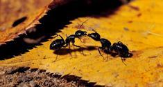 Mrówki w domu i w ogrodzie. Poznaj sposób na mrowki