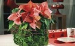 Stroik bożonarodzeniowy z pomysłem - stroik z gwiazdą betlejemską [ZRÓB TO SAM]