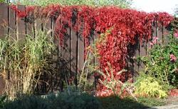 Jesień w ogrodzie: jakie rośliny ogrodowe mają piękne kolory jesienią?