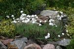 Rośliny na skalniak. Jakie rośliny sadzić na skalniaku